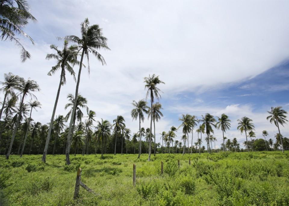 Natai Beach is quiet and undeveloped, making it the perfect relaxation spot and a peaceful day trip
